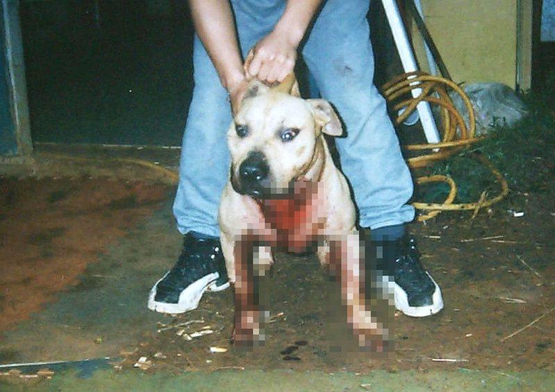 比特犬示意圖,屬於犬隻攻擊人類事件中,最常見的犬種之一。照片警方提供