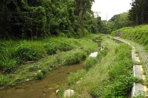 台中東勢林場四角林野溪整治工程,左岸基礎覆土後自生植生。 圖/黃于坡提供