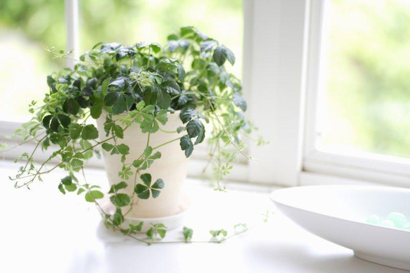 一盆綠色室內植物,讓心情都舒壓。 圖/ingimage 提供