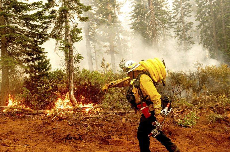 加州消防大隊長紐維爾14日在北方複合山火區,面對熊熊大火,拉著消防水管布署防火牆。美聯社