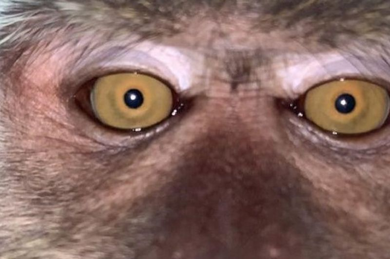 猴子在男子的手機內留下自拍照。取自推特(@Zackrydz)