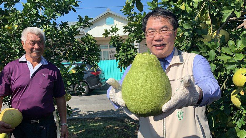 台南市長黃偉哲行銷紅柚。記者吳淑玲/攝影