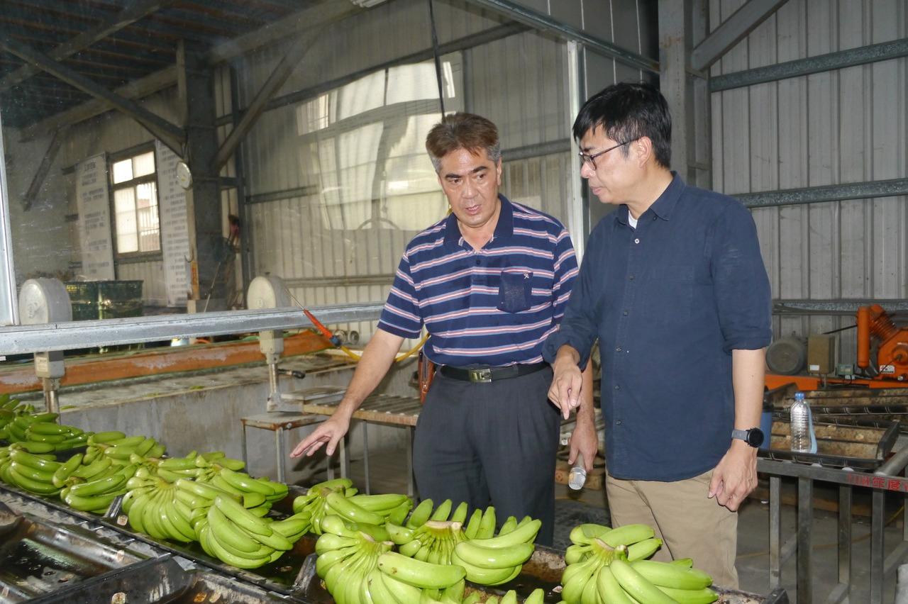 香蕉價跌 陳其邁旗山拚行銷