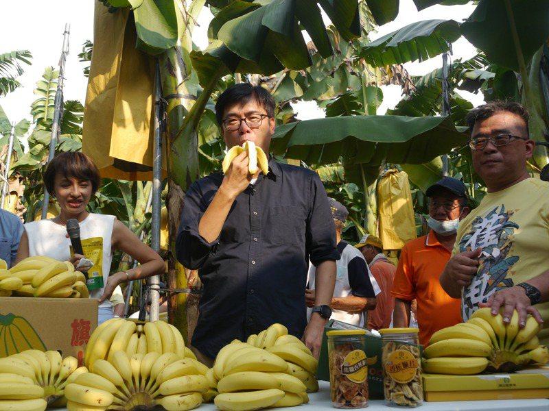 高屏香蕉價格低落,高雄市長陳其邁到旗山蕉園大啖香蕉,鼓勵消費者多多選購。記者徐白櫻/攝影
