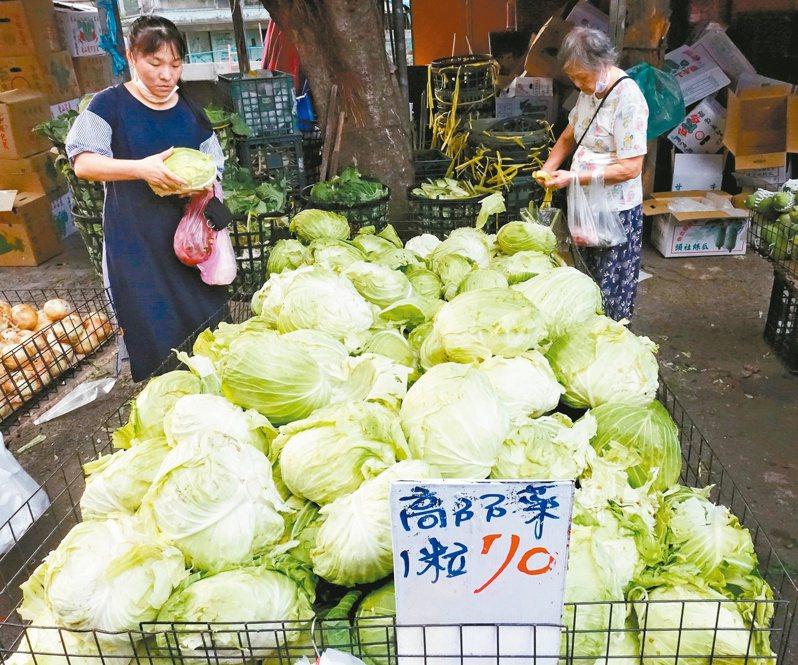 農委會農糧署發出高麗菜「紅色」種苗超種警示燈號,十一月中旬恐重演高麗菜盛產價崩亂象。記者潘俊宏/攝影