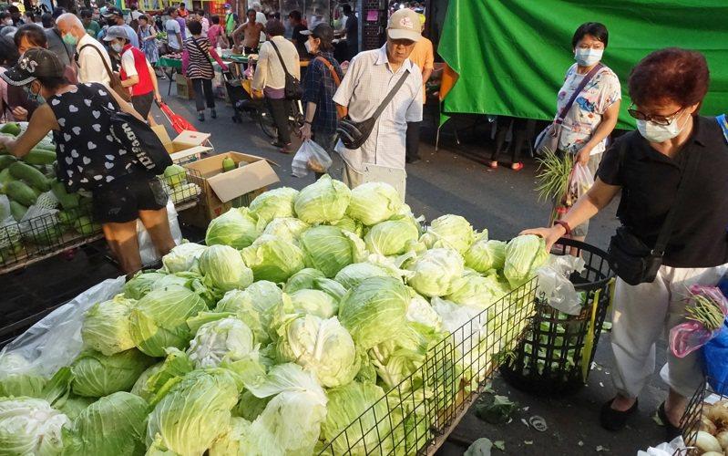 菜農建議,政府要加快整合,打開高麗菜外銷通路。記者潘俊宏/攝影