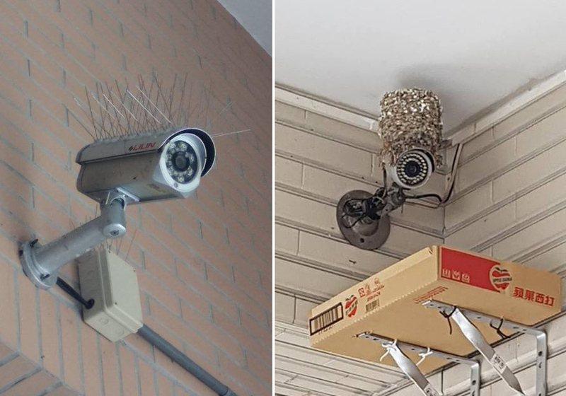 有人好奇監視器上插滿著針的作用是什麼。 圖/新·路上觀察學院臉書