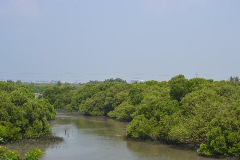 台南市鹽水溪下游到出海口,沿岸有美麗的紅樹林。 圖/鄭惠仁 攝影