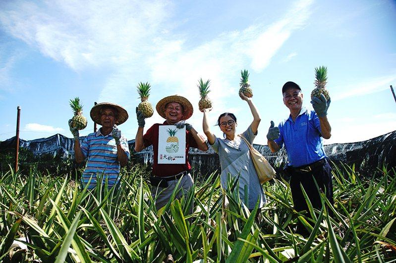 大樹休閒農業區理事長謝坤淞說,鳳梨要現場採、現場切、現場吃,不這麼吃鳳梨,就沒有那種風味。(攝影/曾信耀)