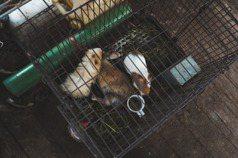 回響/全台首例 兔樂園非法展演挨罰5萬元