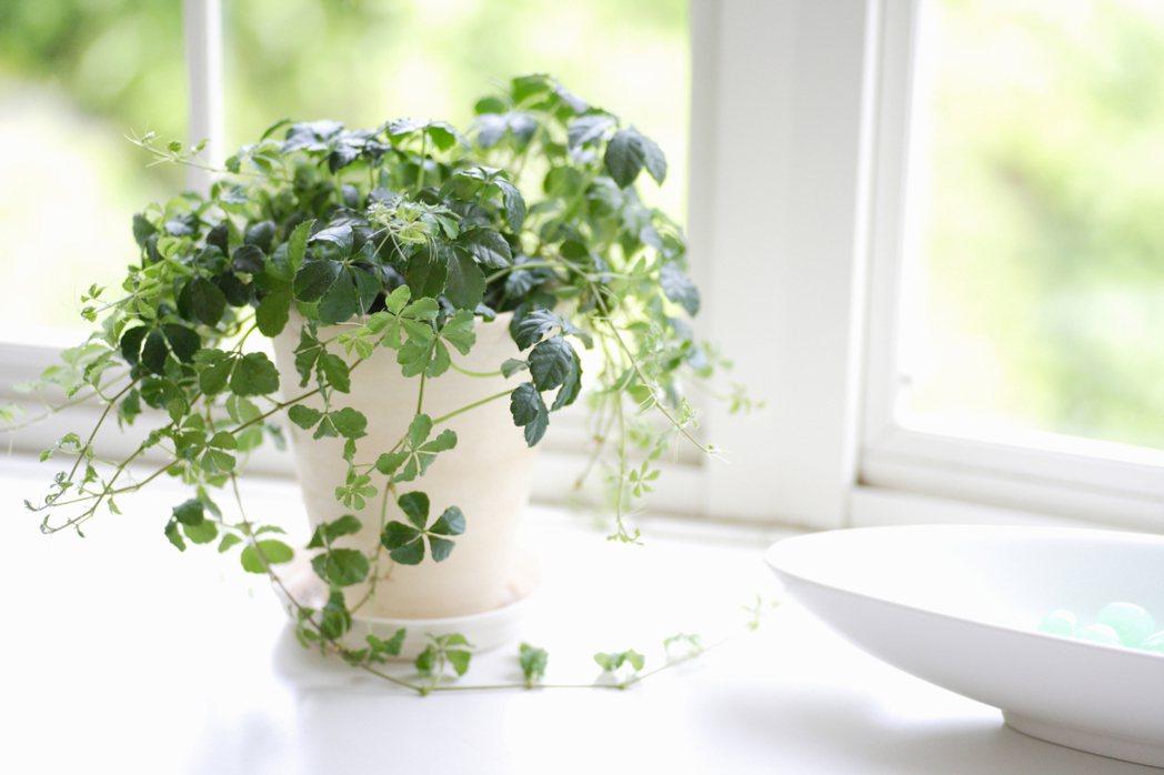 一盆綠色室內植物,讓心情都舒壓。圖/ingimage 提供