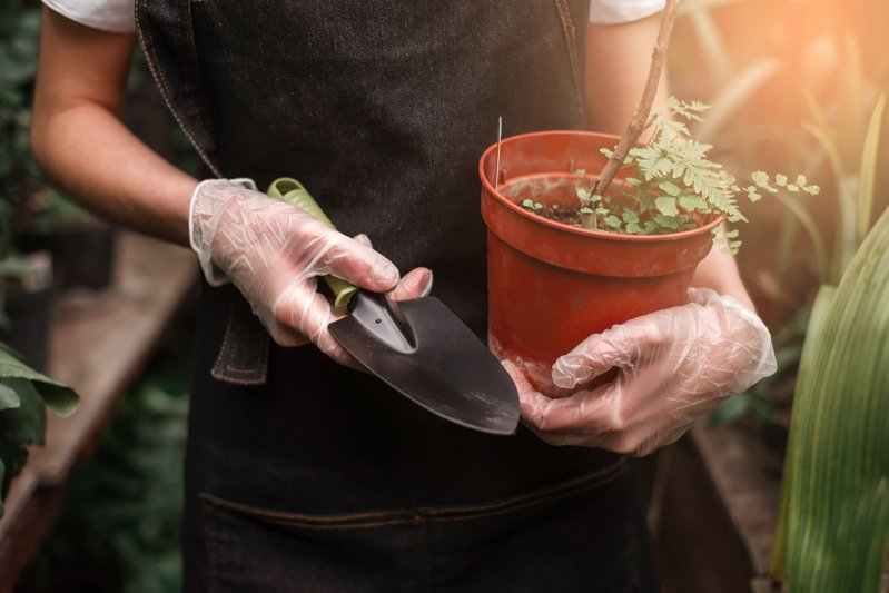 家中常備基本小工具,照顧植物更順手。圖/ingimage 提供