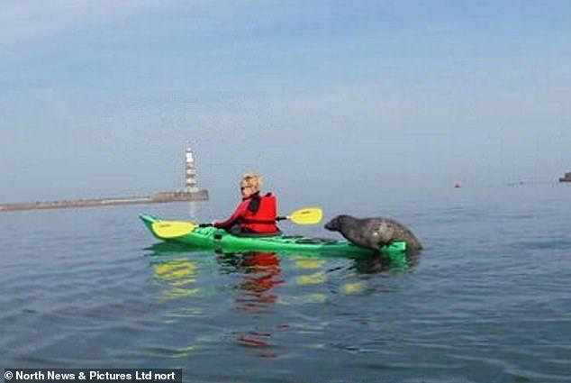 小海豹被皮艇吸引,自己爬上去與丹妮絲一起划船。圖擷自Daily News