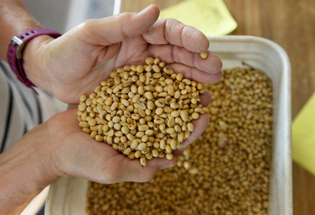 芝加哥期貨交易所黃豆價格18日漲至兩年多新高。(路透)