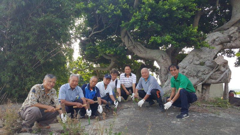 苗栗縣後龍鎮中和里海口土地公廟旁的百年老榕樹,2年前出現傾斜及枝幹枯萎的生存危機,居民和志工決定敲除影響老樹生機的水泥鋪面。報系資料照片