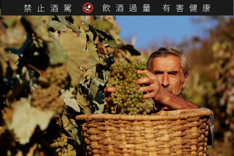高加索葡萄品種高達5百多種。圖/高加索酒櫃提供。提醒您:禁止酒駕 飲酒過量有礙健...