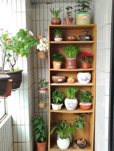 家中擺滿盆栽,使人感到療癒。圖/悠然提供