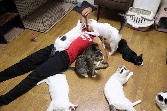 一位日本拳擊手飼養母親留下的18隻貓咪。圖擷取自まいどなニュース