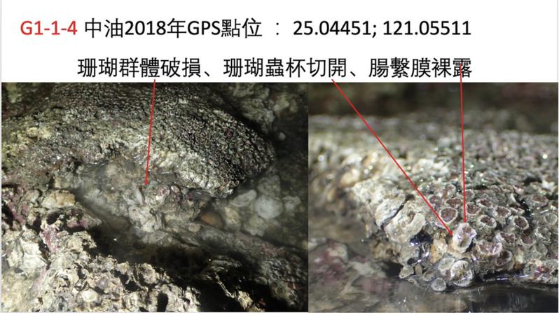 環團出示學者拍攝的柴山多杯孔珊瑚受損照片。圖/環團提供