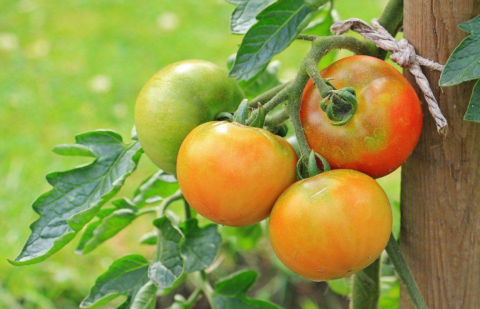 飲食的部分,也會建議攝取富含維生素A的蔬果,都有助於表皮黏膜的修復。 圖/pix...