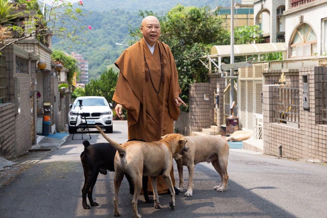 恆述法師父養了一群寵物犬。本報資料照