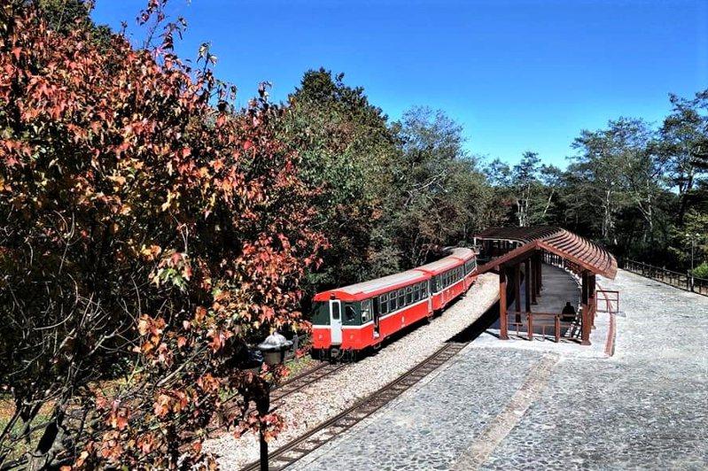 阿里山林業鐵路因應祝山車站改建工程,祝山觀日列車預計10月14日起改停靠對高岳車站。圖/林鐵及文資處提供