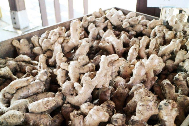 苗栗縣薑麻園休閒農業區利用薑麻的特產,打造出特色。 圖/苗栗縣政府提供