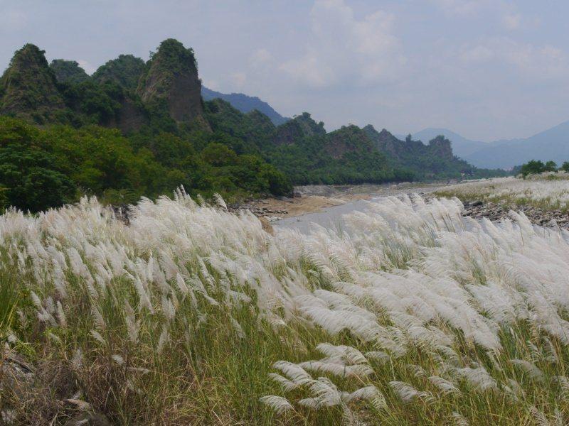 高雄荖濃溪畔開滿甜根子草,「十八羅漢山」河段是六龜境內最佳的賞芒秘境之一。 圖/...