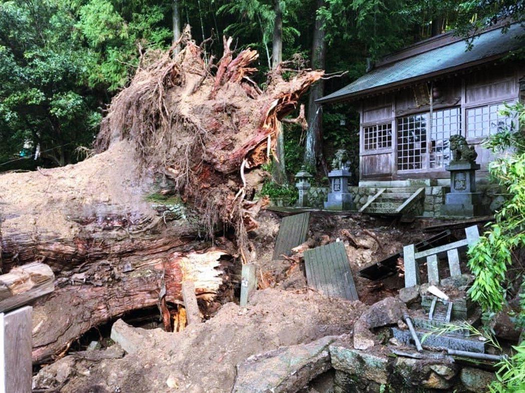 在7月11日的深夜10點30分左右,大湫町的猛烈雨勢,竟使得千年神木連根拔起、就...