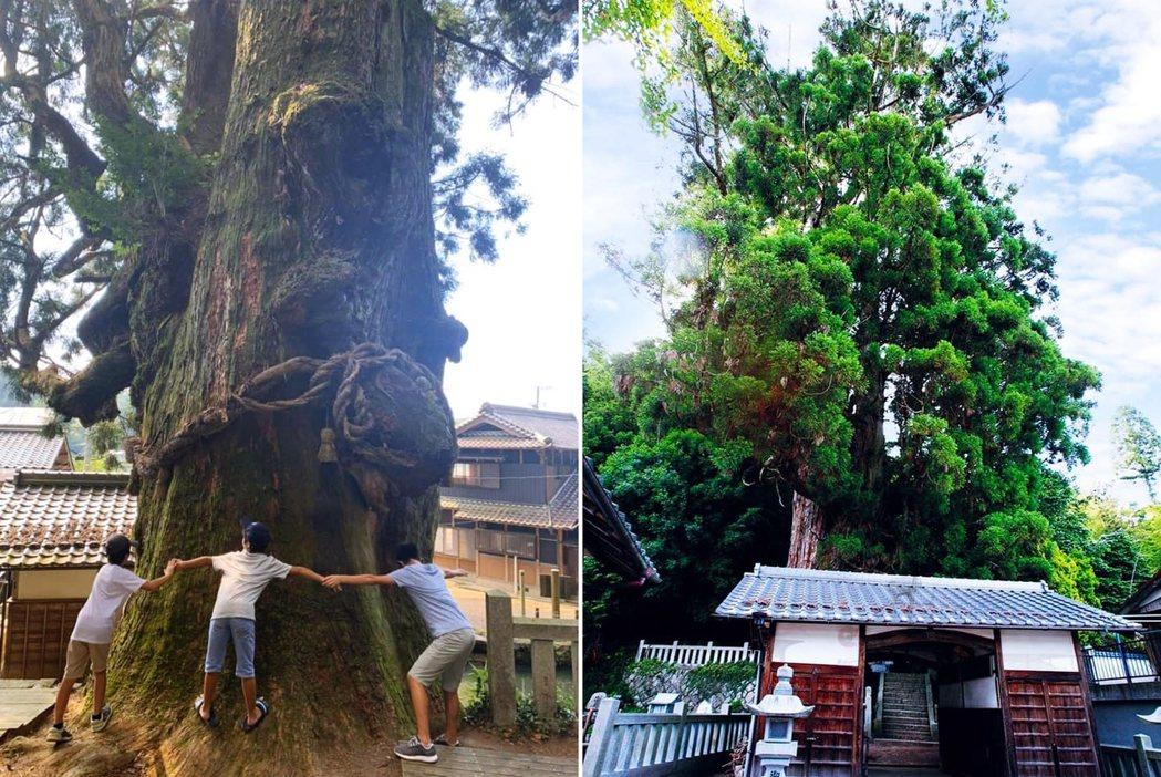 倒塌之前的大杉神木。無論時空如何流變,生活在這片土地的人們,代代傳承的記憶都和大...