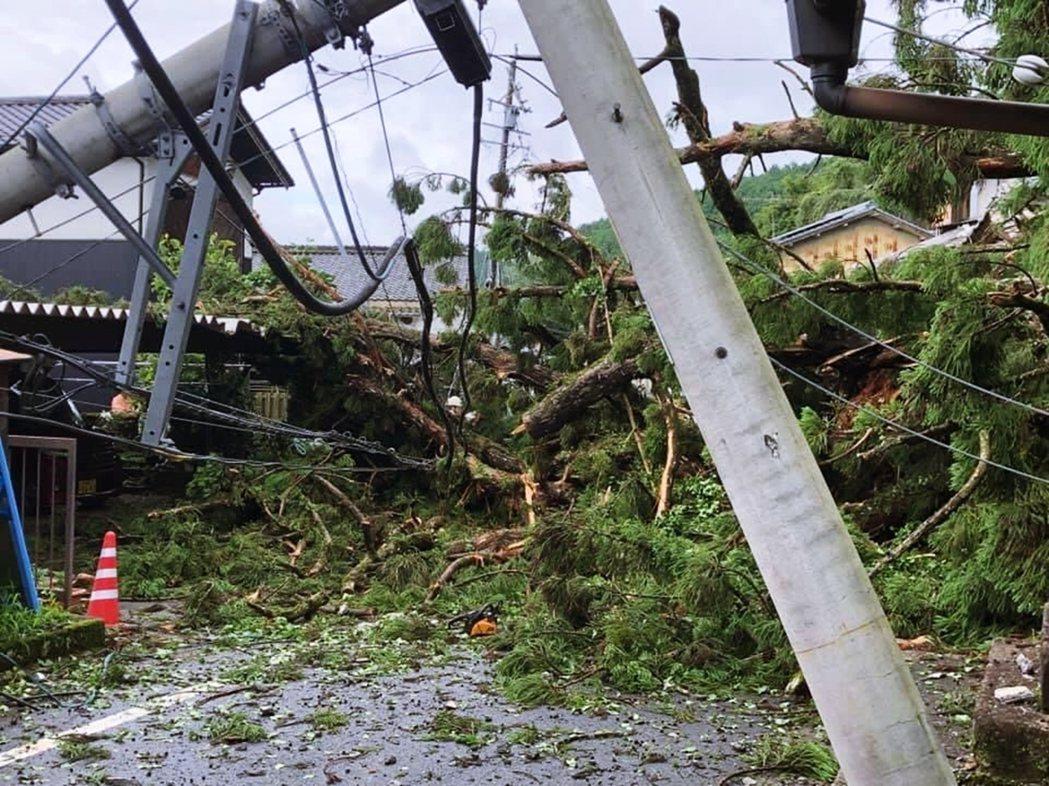 不幸中的大幸是,神木倒下的方向位置並未壓到周邊的民宅、也沒有任何人受傷。 圖/大...