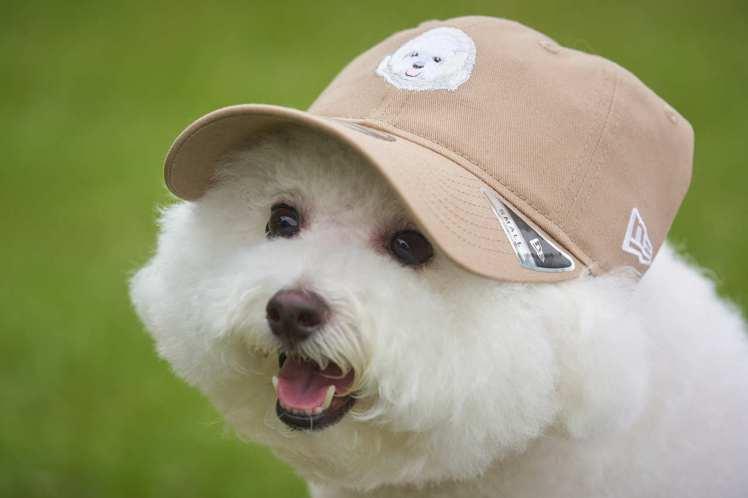 New Era再度推出全新限定「汪大頭」系列帽款,以迎合台灣消費者對於自家毛孩寵...