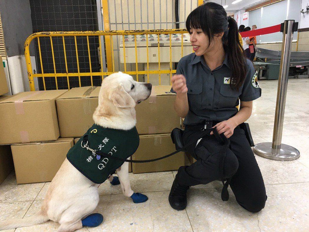 領犬員姚淑惠(右)表示,檢疫犬Shelly已八歲,但依然認真上工,且不害怕人群。...