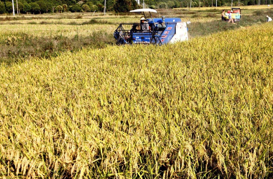 大陸農業農村部韓長賦23日表示,今年糧食進口有所增加,但增加的並不多,適當增加了...