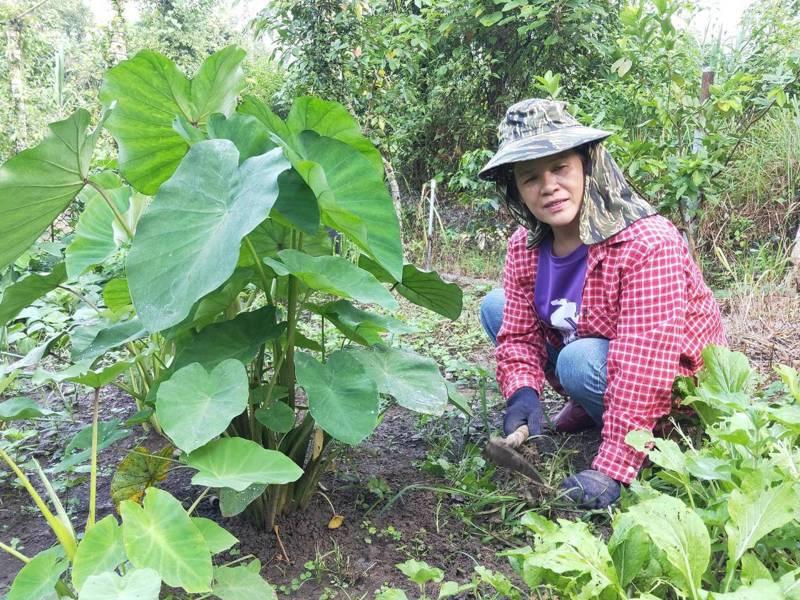 趙田阿美每天都到自家的一小畦快樂農田照看農作物,並將收成分享給朋友。圖/趙田阿美提供