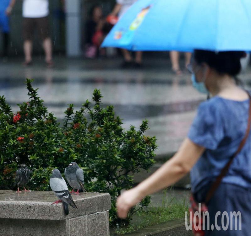 上午起北部、東半部轉有局部陣雨,中南部午後亦有局部短暫陣雨或雷雨。本報資料照片