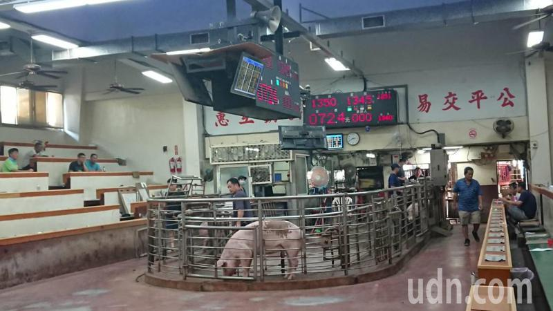 彰化縣肉品市場拍賣毛豬。記者簡慧珍/攝影