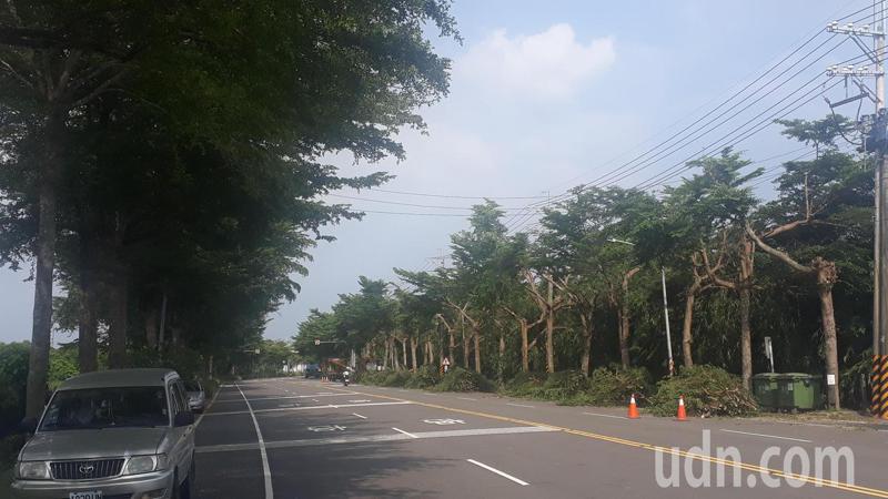 讀者質疑行道樹修剪原本整齊美觀的行道樹(左)被胡亂砍伐;台電強調不會過度砍伐,會盡量維持樹形。記者周宗禎/攝影