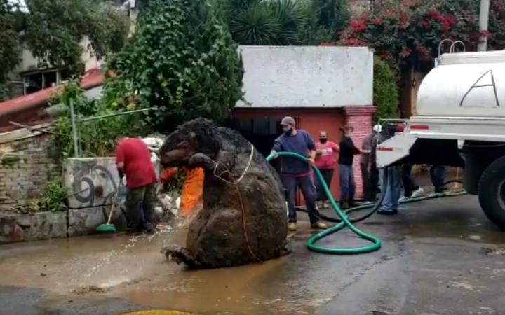 墨西哥近來連日暴雨,清潔人員從堵塞的下水道清出一隻比人還高大的「巨型老鼠」,當場嚇壞所有人。圖擷自Enrique Serna臉書