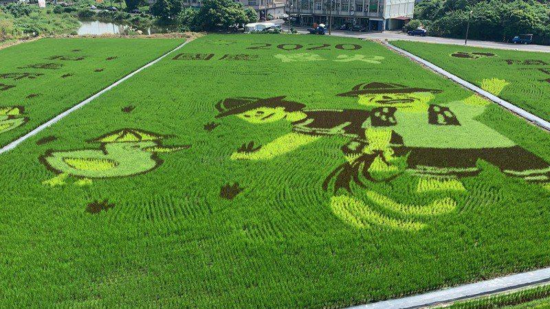 台南後壁好米季「彩繪稻田」正式亮相,由後壁高中美工科競窴獲獎學生構圖而成。記者吳淑玲/攝影