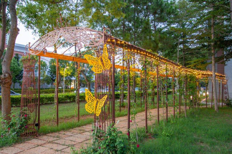 金門大學最近又多一處新景點,最近在校內的華僑大樓旁,精心打造「爬藤花廊道」,可呈現四季的美麗花海景致。圖/金大提供