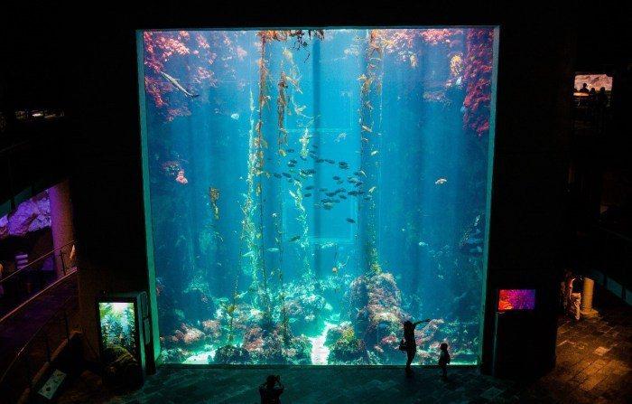 國立海洋生物博物館。 圖/Flickr