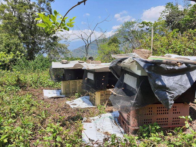 高山林地少農藥,是十分天然的養蜂環境。圖/高市農業局提供
