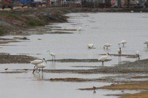 吳宗蓉/當綠能遇上濕地:衝突中協商,「環社檢核」的倡議哲學
