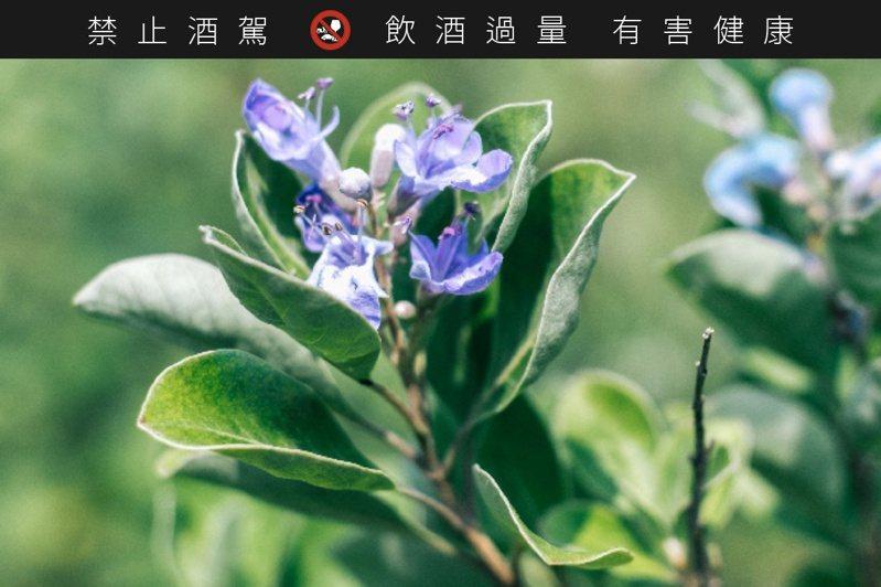 紫色的濱海植物單葉蔓荊,自古就是用做香氛的小花。圖/摘自櫻尾琴酒官網。提醒您:禁止酒駕 飲酒過量有礙健康。