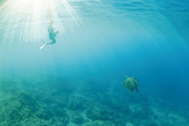 在海中與海龜同行。文‧照片提供/蘇淮