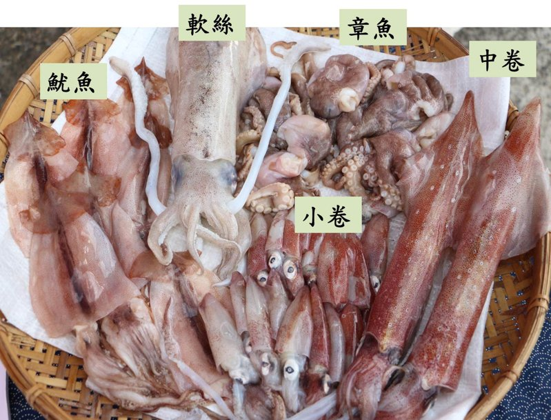 每年6到8月是小卷、花枝、透抽產季,都屬於頭足類海鮮,外型雖有相似處不易分辨,民眾挑選時可透過外觀特徵分辨。圖/新北市漁管處提供