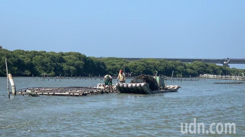 台南七股潟湖搭觀光膠筏飽覽蚵田,是很受歡迎的行程。記者吳淑玲/攝影