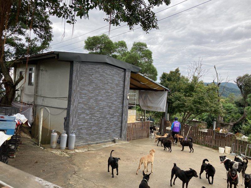 新北市三芝區金汪汪狗園收養400多隻流浪犬。圖/民眾提供