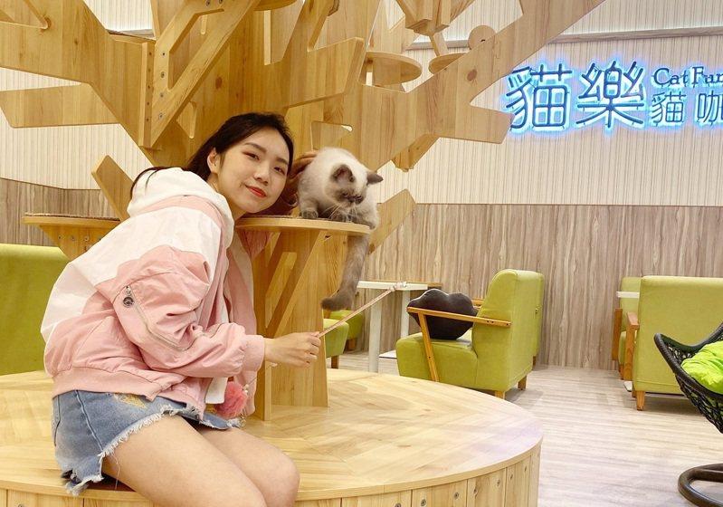 環球購物中心新北中和店進駐「貓樂貓咖啡」,有10隻貓咪療癒紓壓。環球購物中心/提供